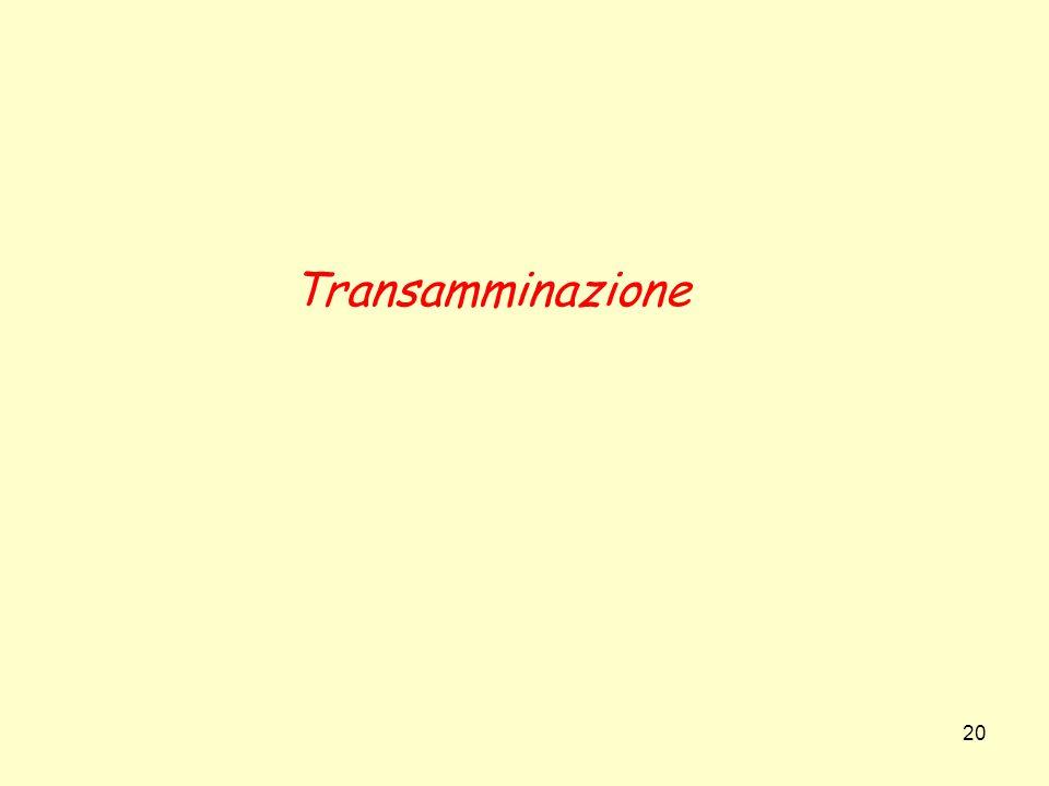 20 Transamminazione