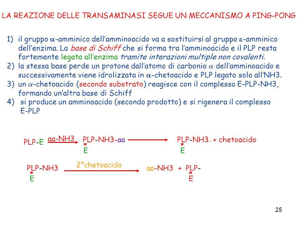25 1)il gruppo -amminico dellamminoacido va a sostituirsi al gruppo -amminico dellenzima. La base di Schiff che si forma tra lamminoacido e il PLP res