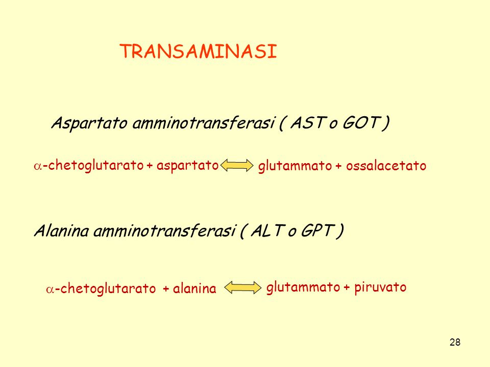 28 TRANSAMINASI Aspartato amminotransferasi ( AST o GOT ) -chetoglutarato + aspartato glutammato + ossalacetato Alanina amminotransferasi ( ALT o GPT