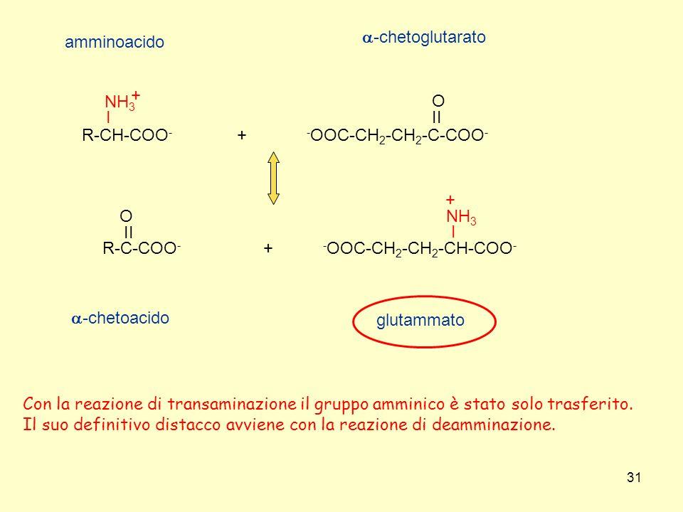 31 - OOC-CH 2 -CH 2 -C-COO - II O R-C-COO - II O R-CH-COO - I NH 3 + + + - OOC-CH 2 -CH 2 -CH-COO - I NH 3 + amminoacido -chetoglutarato -chetoacido g
