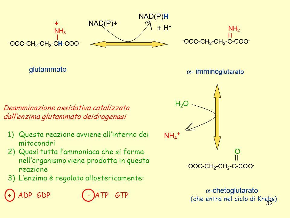 32 - OOC-CH 2 -CH 2 -C-COO - II O -chetoglutarato - OOC-CH 2 -CH 2 -CH-COO - I NH 3 + glutammato - OOC-CH 2 -CH 2 -C-COO - - immino glutarato I NH 2 I