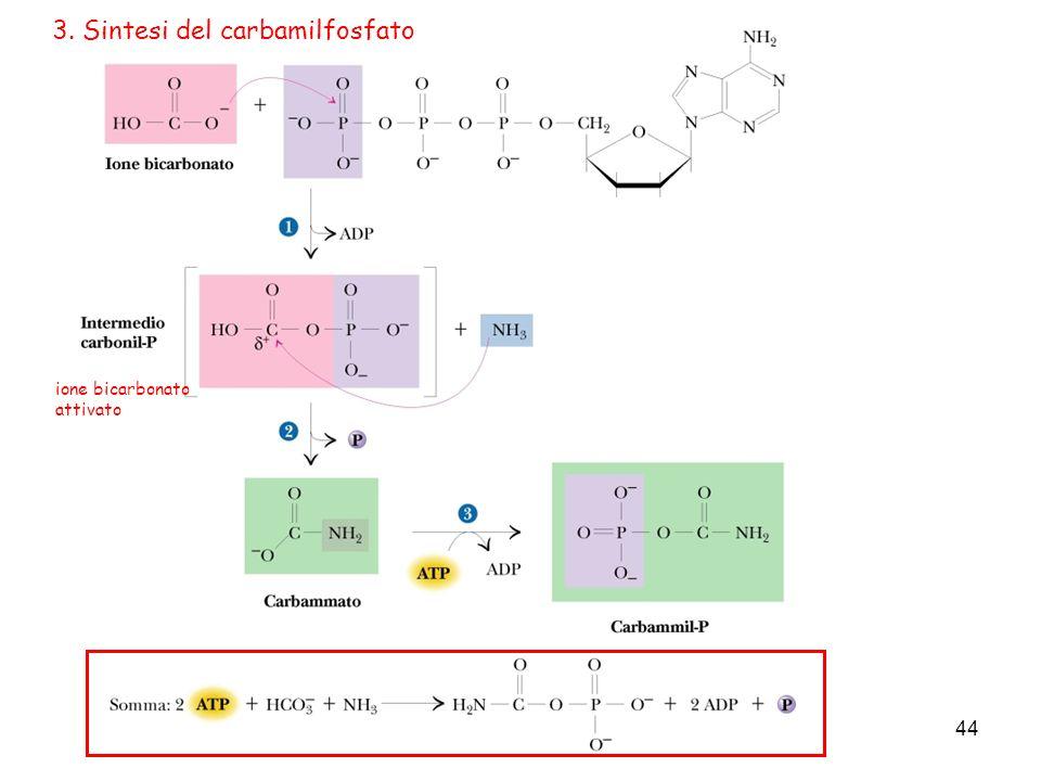 44 3. Sintesi del carbamilfosfato ione bicarbonato attivato