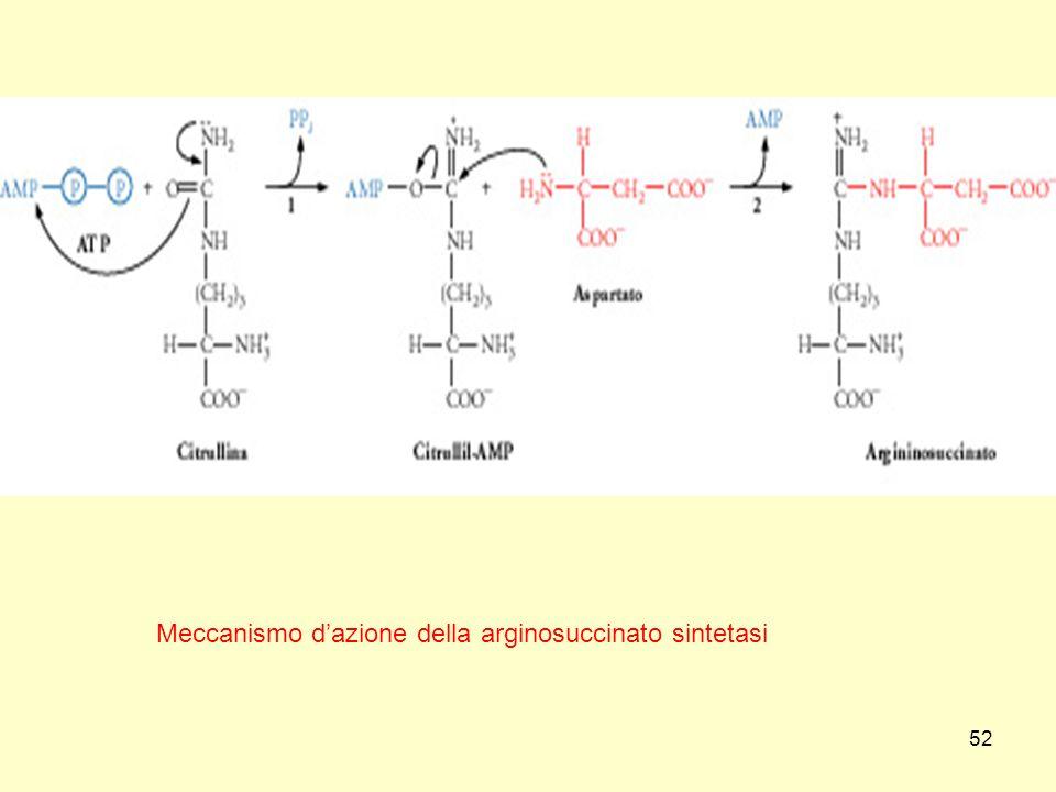 52 Meccanismo dazione della arginosuccinato sintetasi