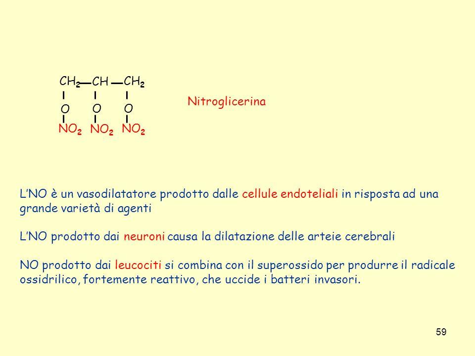 59 CH 2 CH OO O NO 2 Nitroglicerina LNO è un vasodilatatore prodotto dalle cellule endoteliali in risposta ad una grande varietà di agenti LNO prodott