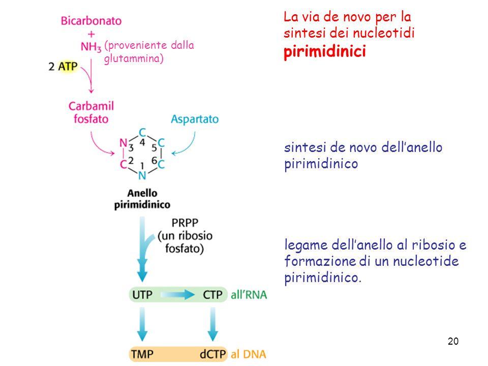 20 La via de novo per la sintesi dei nucleotidi pirimidinici sintesi de novo dellanello pirimidinico legame dellanello al ribosio e formazione di un n