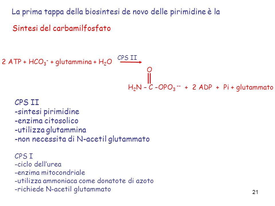 21 2 ATP + HCO 3 - + glutammina + H 2 O H 2 N – C –OPO 3 -- + 2 ADP + Pi + glutammato O Sintesi del carbamilfosfato CPS II -sintesi pirimidine -enzima