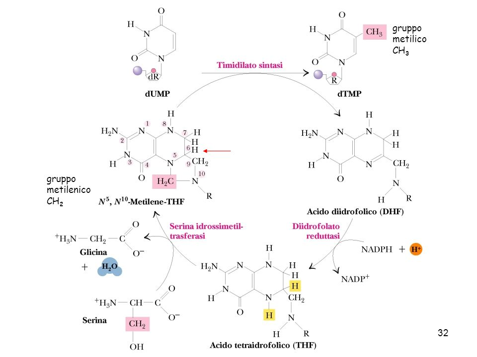 32 gruppo metilenico CH 2 gruppo metilico CH 3