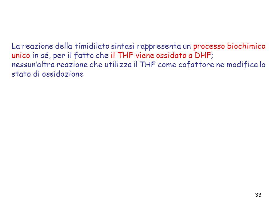 33 La reazione della timidilato sintasi rappresenta un processo biochimico unico in sé, per il fatto che il THF viene ossidato a DHF; nessunaltra reaz