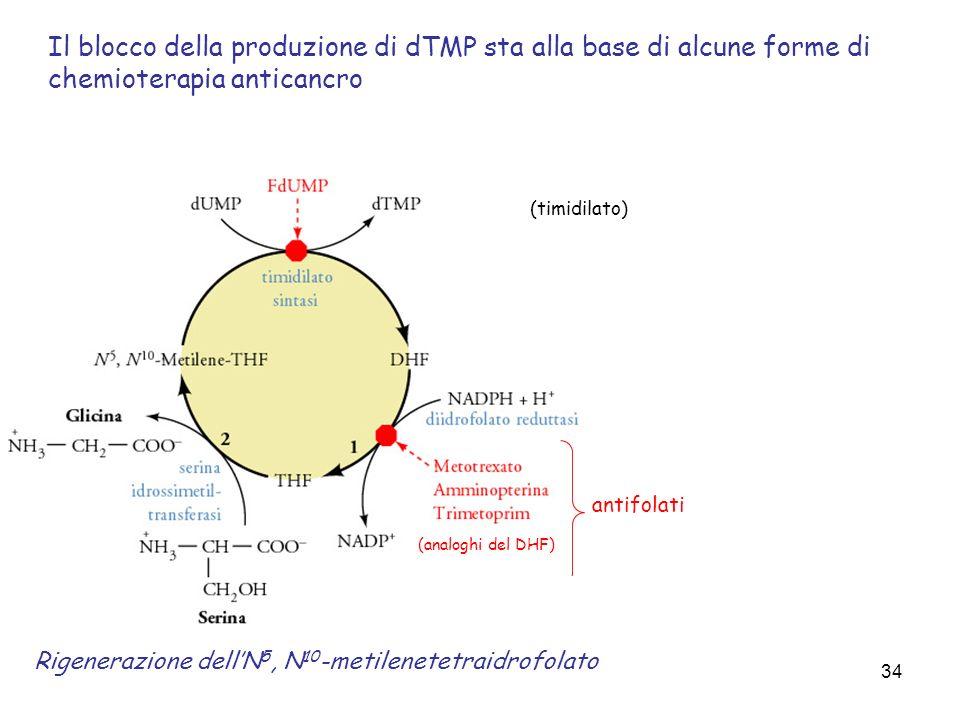 34 Rigenerazione dellN 5, N 10 -metilenetetraidrofolato (timidilato) Il blocco della produzione di dTMP sta alla base di alcune forme di chemioterapia