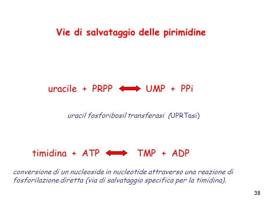38 Vie di salvataggio delle pirimidine uracile + PRPPUMP + PPi timidina + ATPTMP + ADP uracil fosforibosil transferasi (UPRTasi) conversione di un nuc