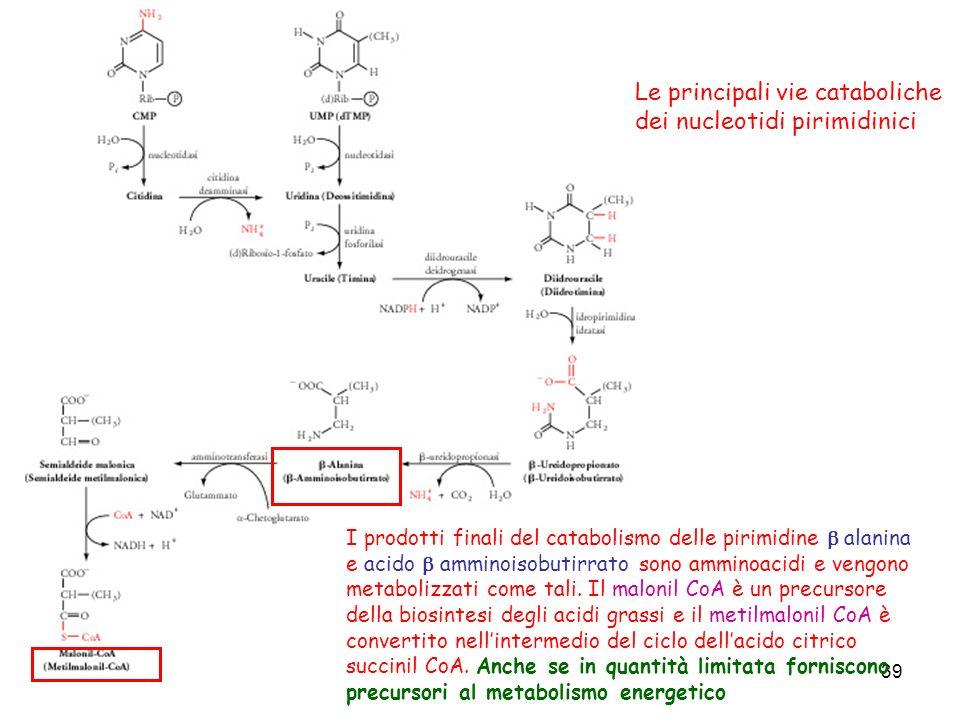 39 Le principali vie cataboliche dei nucleotidi pirimidinici I prodotti finali del catabolismo delle pirimidine alanina e acido amminoisobutirrato son