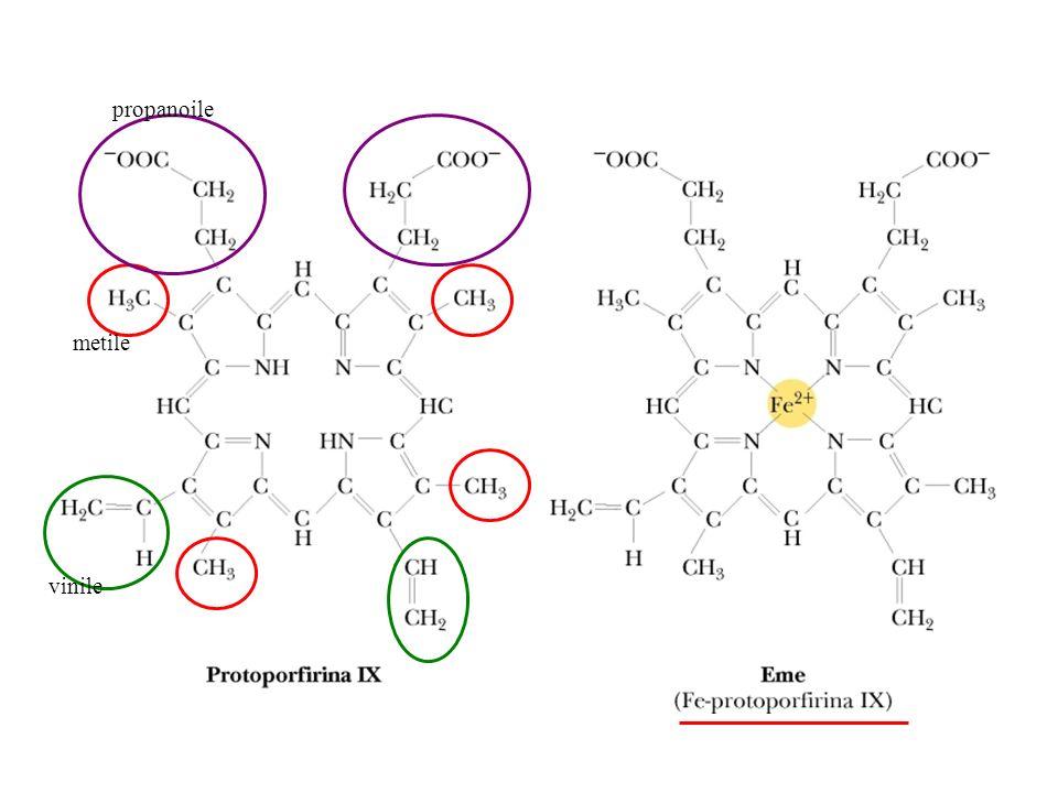 Legame dellossigeno allemoglobina: curva sigmoide In ogni sistema di legame una curva di tipo sigmoide è indicativa della presenza di interazioni cooperative tra i siti di legame.