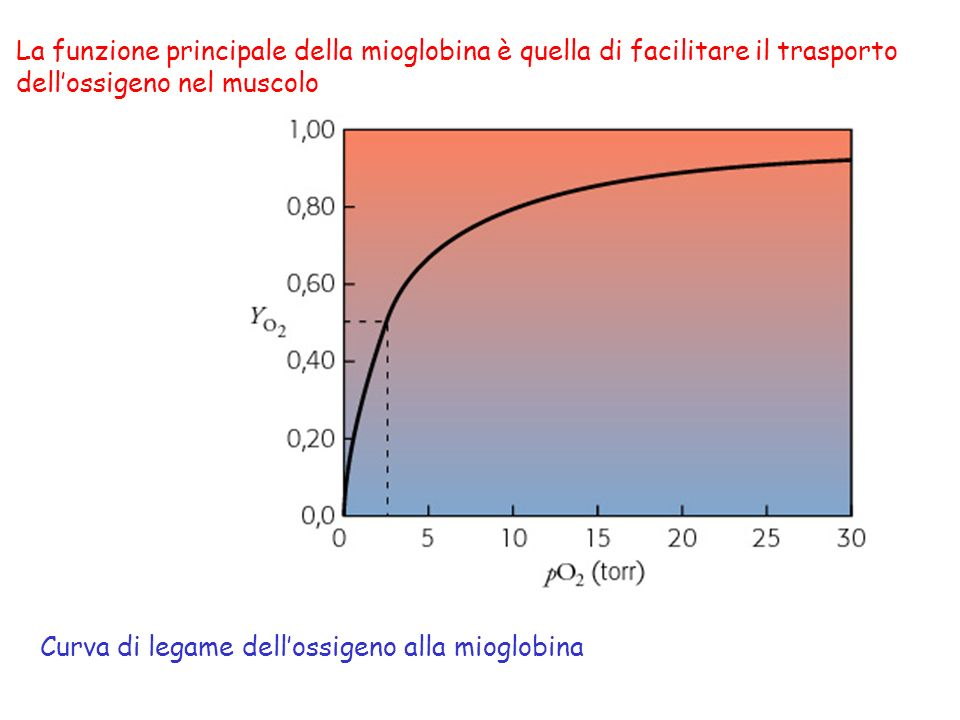 Curve di dissociazione dellossigeno dellemoglobina e della mioglobina