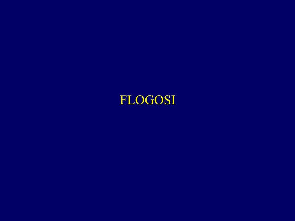 FLOGOSI