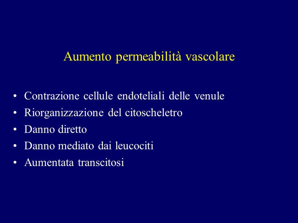 Aumento permeabilità vascolare Contrazione cellule endoteliali delle venule Riorganizzazione del citoscheletro Danno diretto Danno mediato dai leucoci