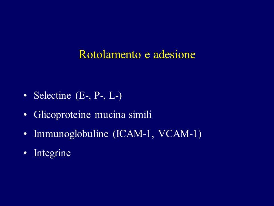 Rotolamento e adesione Selectine (E-, P-, L-) Glicoproteine mucina simili Immunoglobuline (ICAM-1, VCAM-1) Integrine