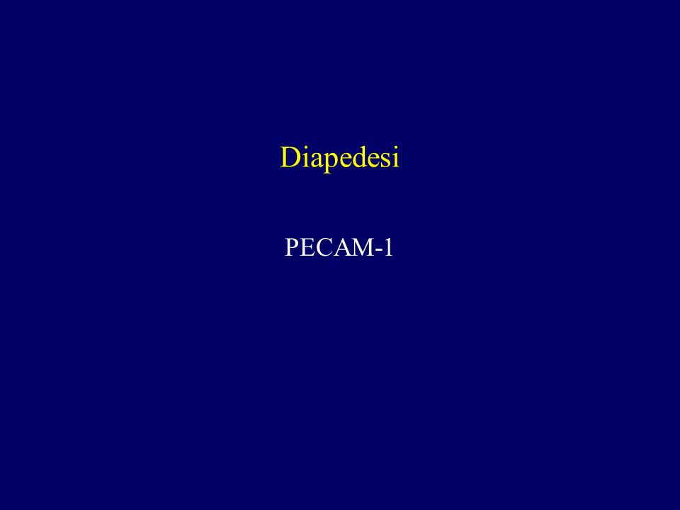 Diapedesi PECAM-1