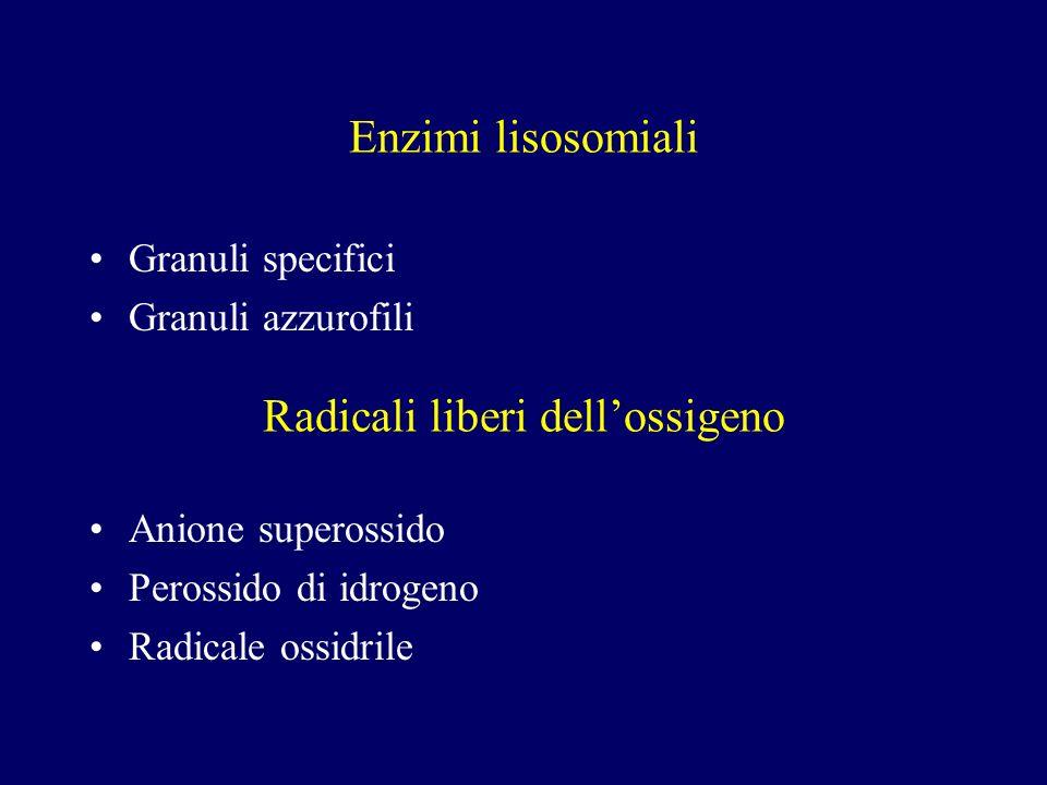 Enzimi lisosomiali Granuli specifici Granuli azzurofili Radicali liberi dellossigeno Anione superossido Perossido di idrogeno Radicale ossidrile