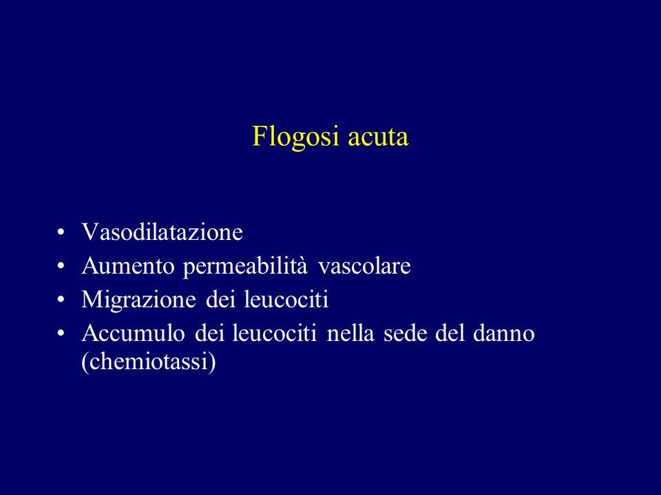 Flogosi acuta Vasodilatazione Aumento permeabilità vascolare Migrazione dei leucociti Accumulo dei leucociti nella sede del danno (chemiotassi)