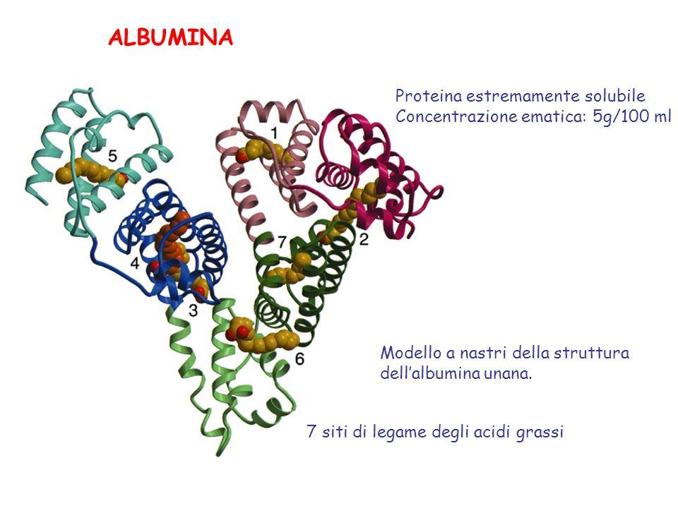 La CRP è la principale componente della reazione della fase acuta e un marcatore delle infezioni batteriche.