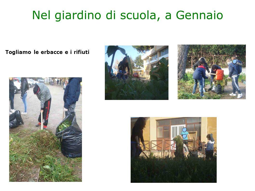 Nel giardino di scuola, a Gennaio Togliamo le erbacce e i rifiuti