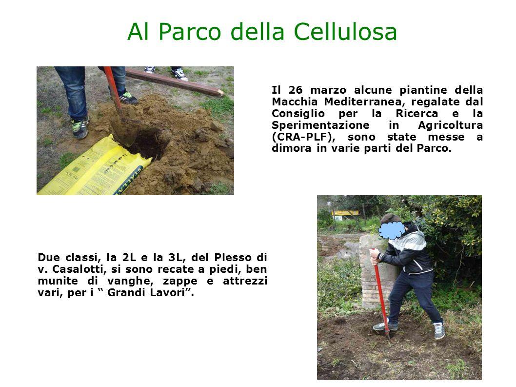 Al Parco della Cellulosa Il 26 marzo alcune piantine della Macchia Mediterranea, regalate dal Consiglio per la Ricerca e la Sperimentazione in Agricol