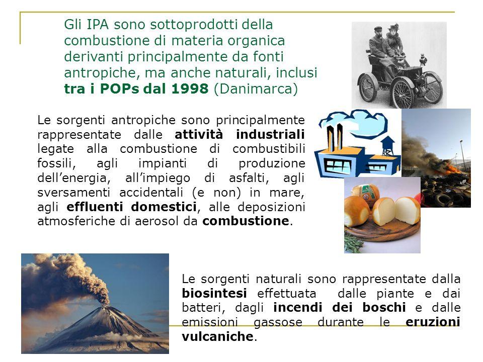Gli IPA sono sottoprodotti della combustione di materia organica derivanti principalmente da fonti antropiche, ma anche naturali, inclusi tra i POPs d