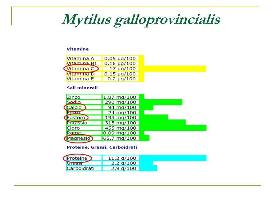 Tra gli 11 evidenziati, ci sono 3 probabili cancerogeni (IARC, gruppo 2A, futuro 1A): Benzo[a]pirene Dibenzo[a,h]antracene Benzo[a]antracene …e 5 possibili cancerogeni (IARC, gruppo 2B): 5-metilcrisene Benzo[b]fluorantene Benzo[k]fluorantene Dibenzo[a,i]pirene Indeno[1,2,3-cd]pirene IPA : Idrocarburi Policiclici Aromatici Tossicità: sono riconosciuti dal recettore AHR (cfr.