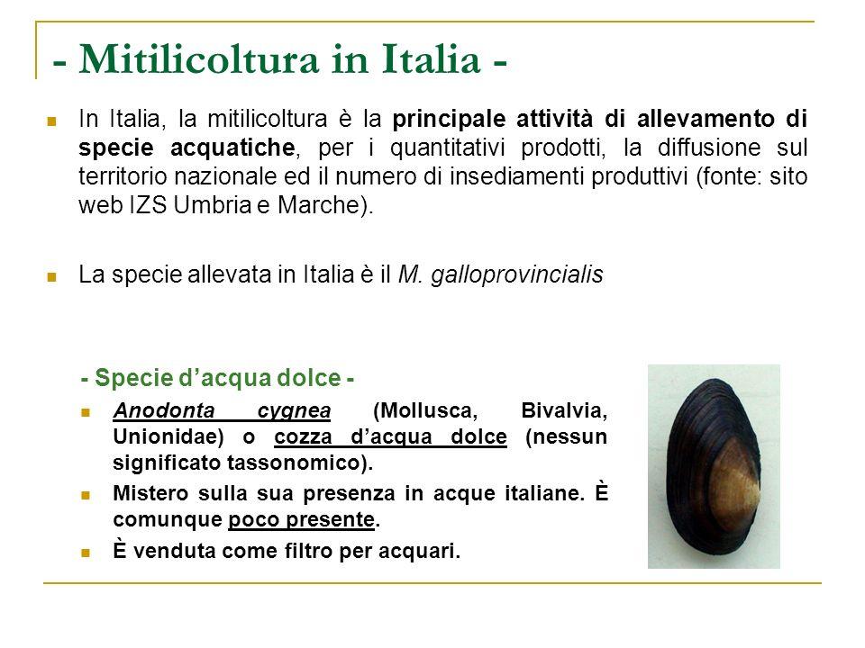 - Mitilicoltura in Italia - In Italia, la mitilicoltura è la principale attività di allevamento di specie acquatiche, per i quantitativi prodotti, la