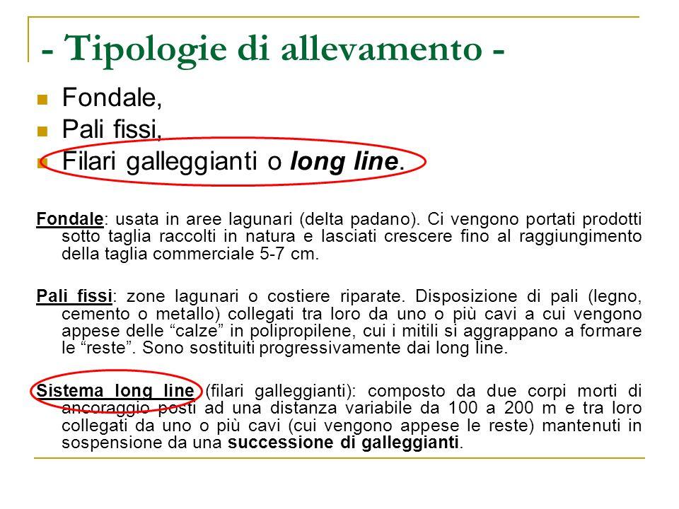 - Mitilicoltura in Campania - Impianti di allevamento di cozze su filari long-line (Foto scattata dal litorale di T.Annunziata.