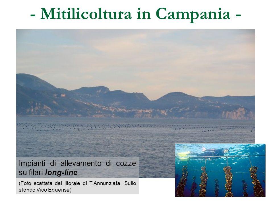 - Mitilicoltura in Campania - Impianti di allevamento di cozze su filari long-line (Foto scattata dal litorale di T.Annunziata. Sullo sfondo Vico Eque