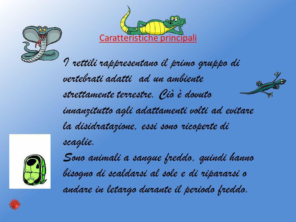 Caratteristiche principali I rettili rappresentano il primo gruppo di vertebrati adatti ad un ambiente strettamente terrestre. Ciò è dovuto innanzitut