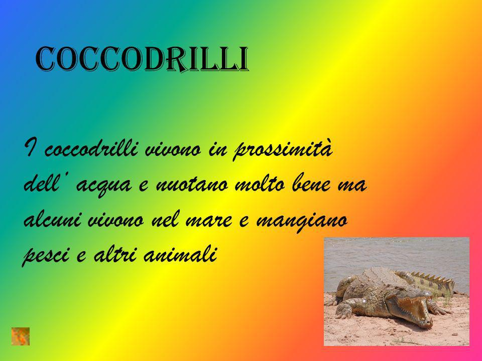 coccodrilli I coccodrilli vivono in prossimità dell acqua e nuotano molto bene ma alcuni vivono nel mare e mangiano pesci e altri animali