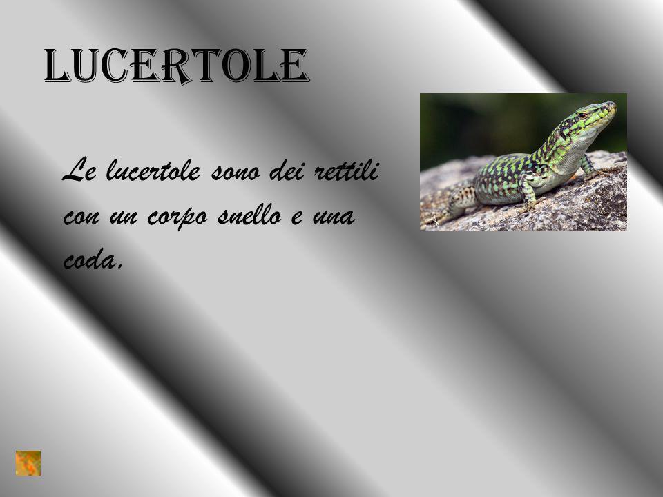 lucertole Le lucertole sono dei rettili con un corpo snello e una coda.
