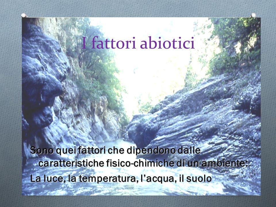 I fattori abiotici Sono quei fattori che dipendono dalle caratteristiche fisico-chimiche di un ambiente: La luce, la temperatura, lacqua, il suolo