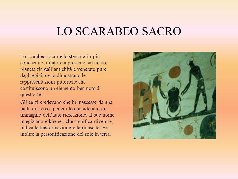 LO SCARABEO SACRO Lo scarabeo sacro è lo stercorario più conosciuto, infatti era presente sul nostro pianeta fin dallantichità e venerato pure dagli e
