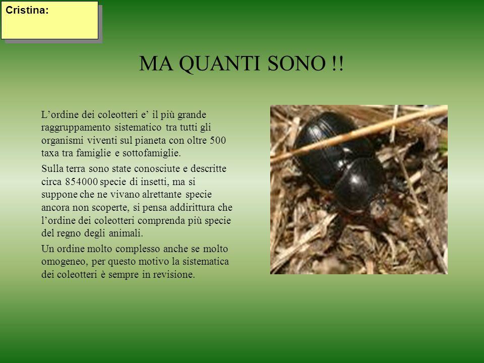 MA QUANTI SONO !! Lordine dei coleotteri e il più grande raggruppamento sistematico tra tutti gli organismi viventi sul pianeta con oltre 500 taxa tra