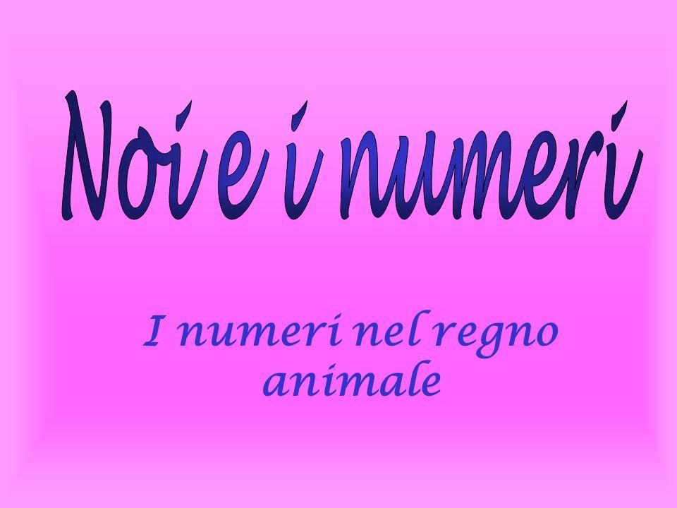 Gli animali sanno contare.