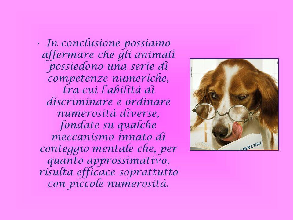 In conclusione possiamo affermare che gli animali possiedono una serie di competenze numeriche, tra cui labilità di discriminare e ordinare numerosità