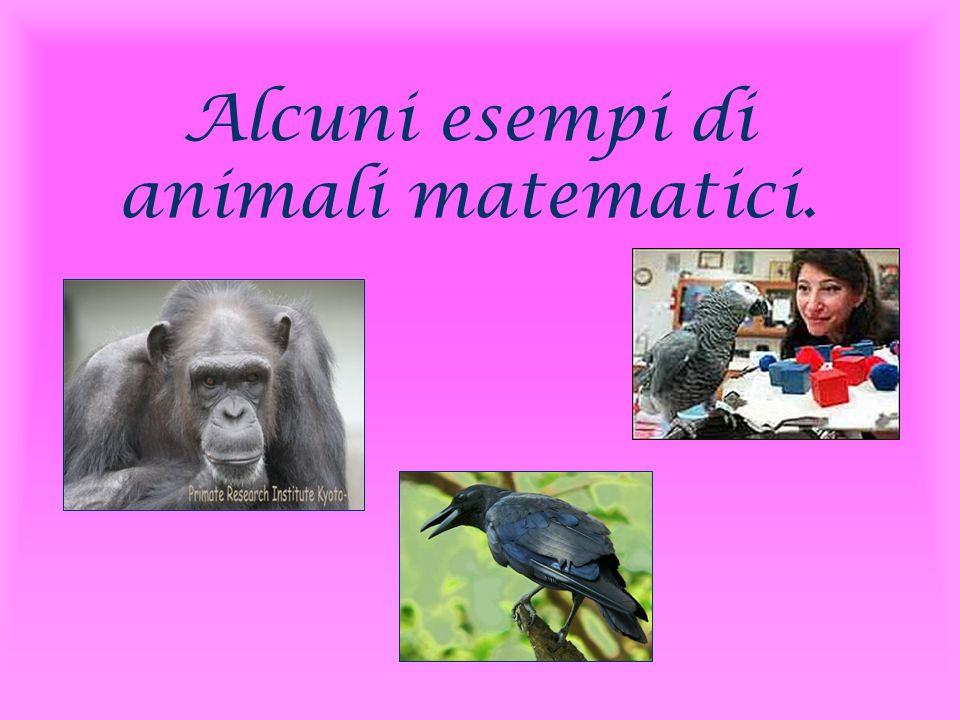 Alcuni esempi di animali matematici.