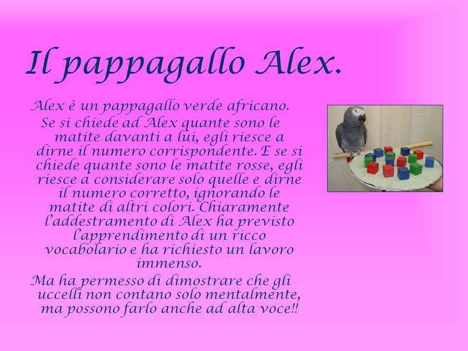 Il pappagallo Alex. Alex è un pappagallo verde africano. Se si chiede ad Alex quante sono le matite davanti a lui, egli riesce a dirne il numero corri