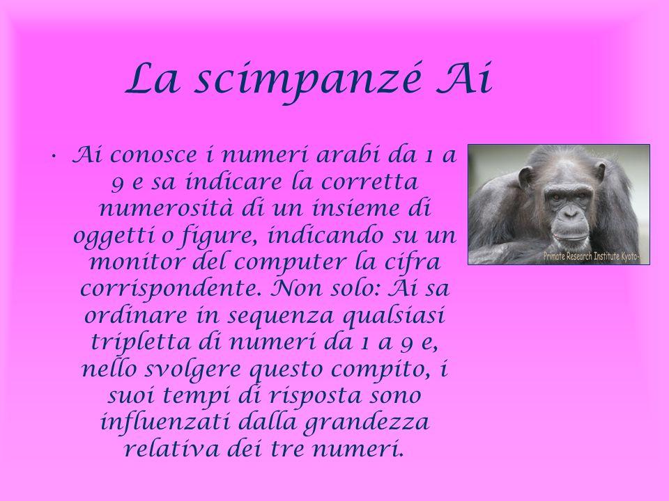 La scimpanzé Ai Ai conosce i numeri arabi da 1 a 9 e sa indicare la corretta numerosità di un insieme di oggetti o figure, indicando su un monitor del