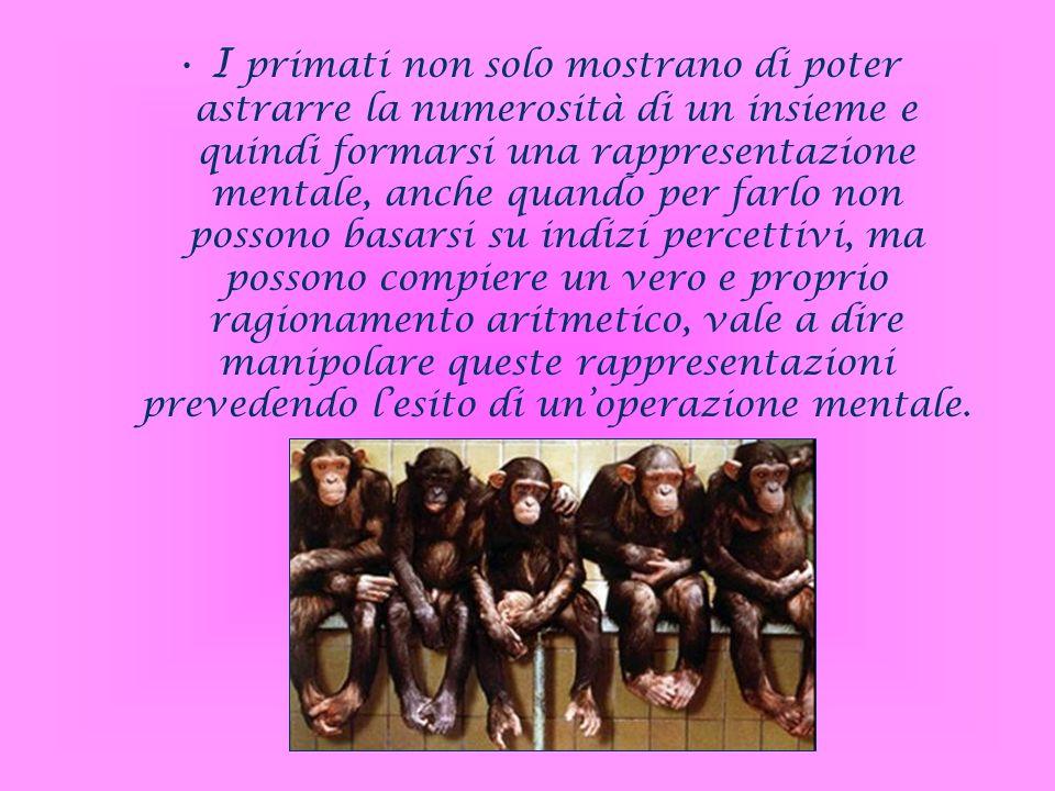 I primati non solo mostrano di poter astrarre la numerosità di un insieme e quindi formarsi una rappresentazione mentale, anche quando per farlo non p