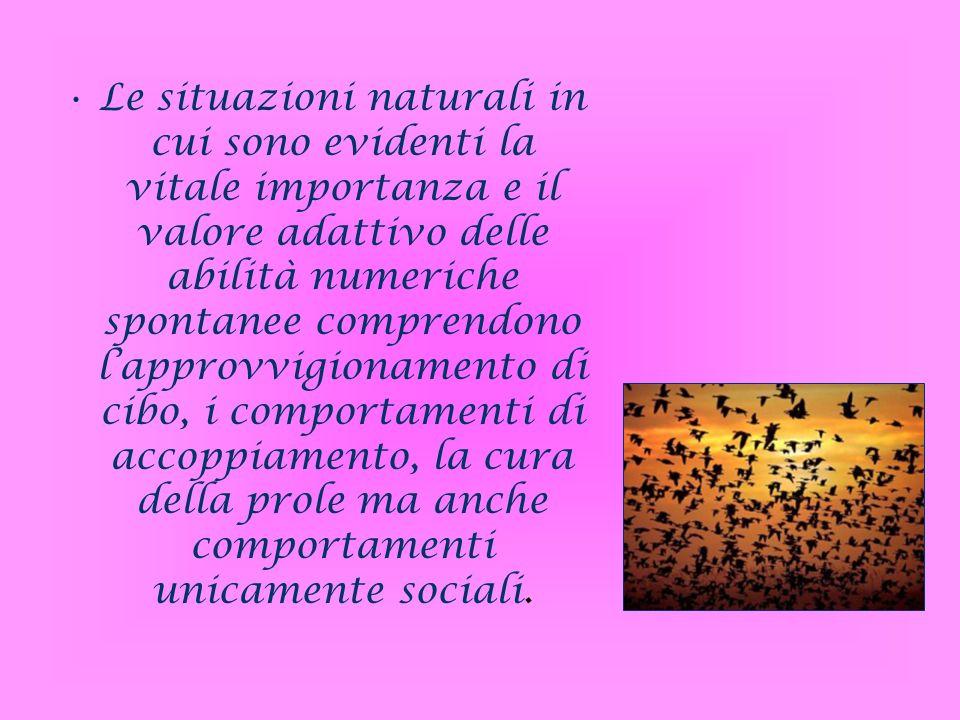 Le situazioni naturali in cui sono evidenti la vitale importanza e il valore adattivo delle abilità numeriche spontanee comprendono lapprovvigionament
