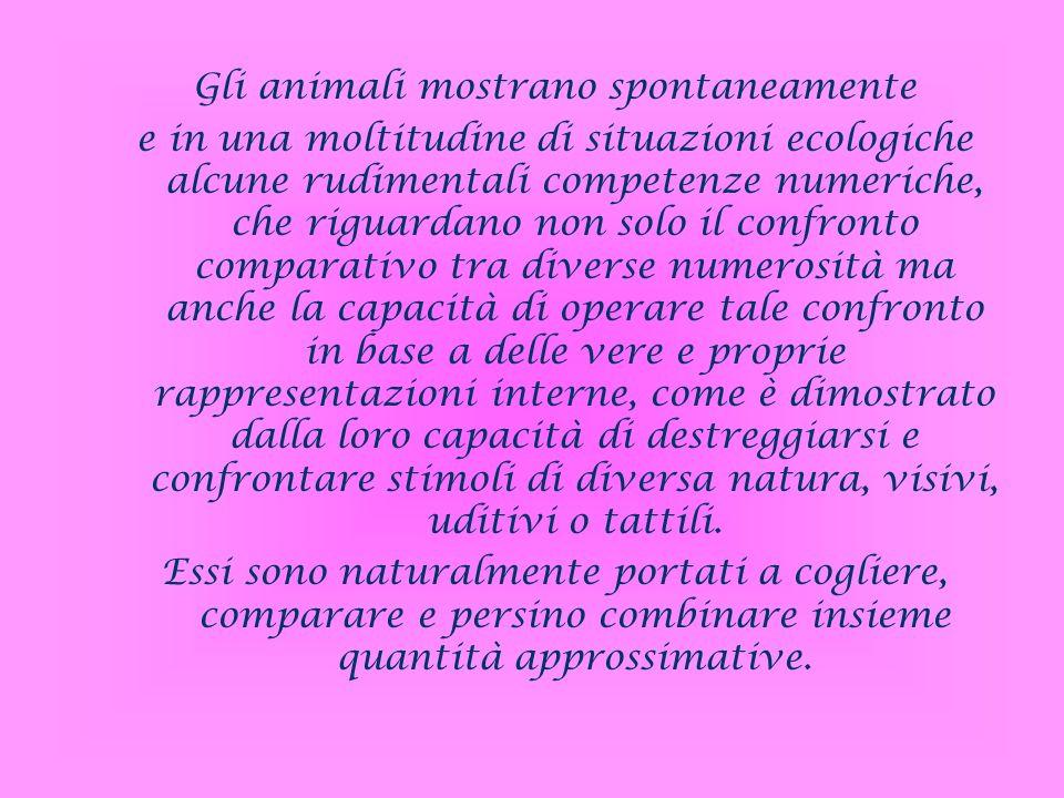 Gli animali mostrano spontaneamente e in una moltitudine di situazioni ecologiche alcune rudimentali competenze numeriche, che riguardano non solo il