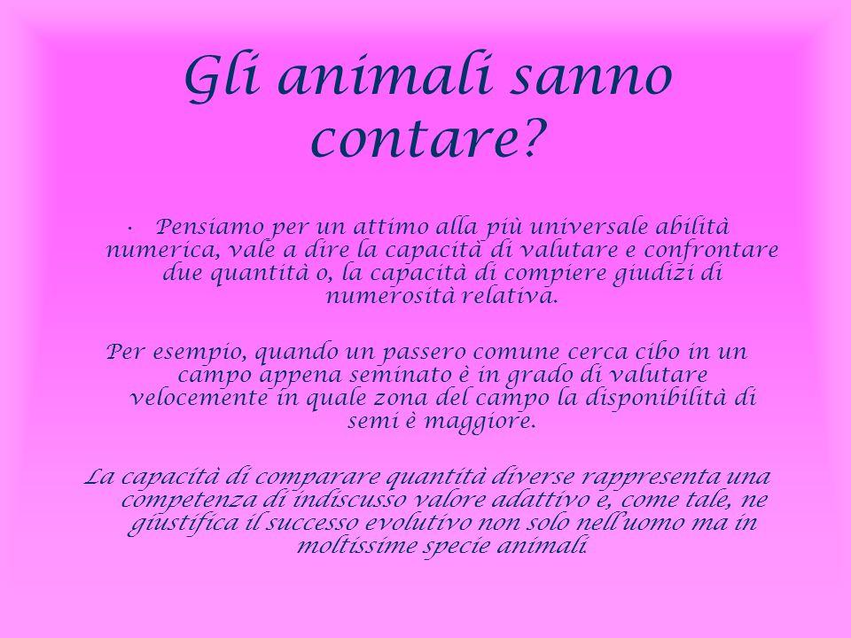 Gli animali sanno contare? Pensiamo per un attimo alla più universale abilità numerica, vale a dire la capacità di valutare e confrontare due quantità