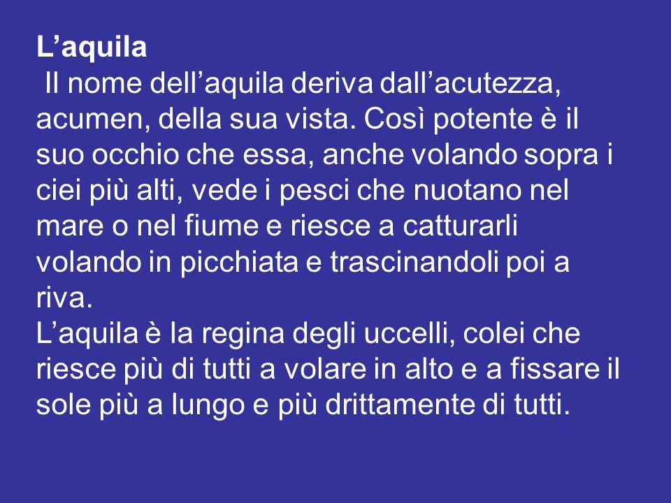 Laquila Il nome dellaquila deriva dallacutezza, acumen, della sua vista. Così potente è il suo occhio che essa, anche volando sopra i ciei più alti, v
