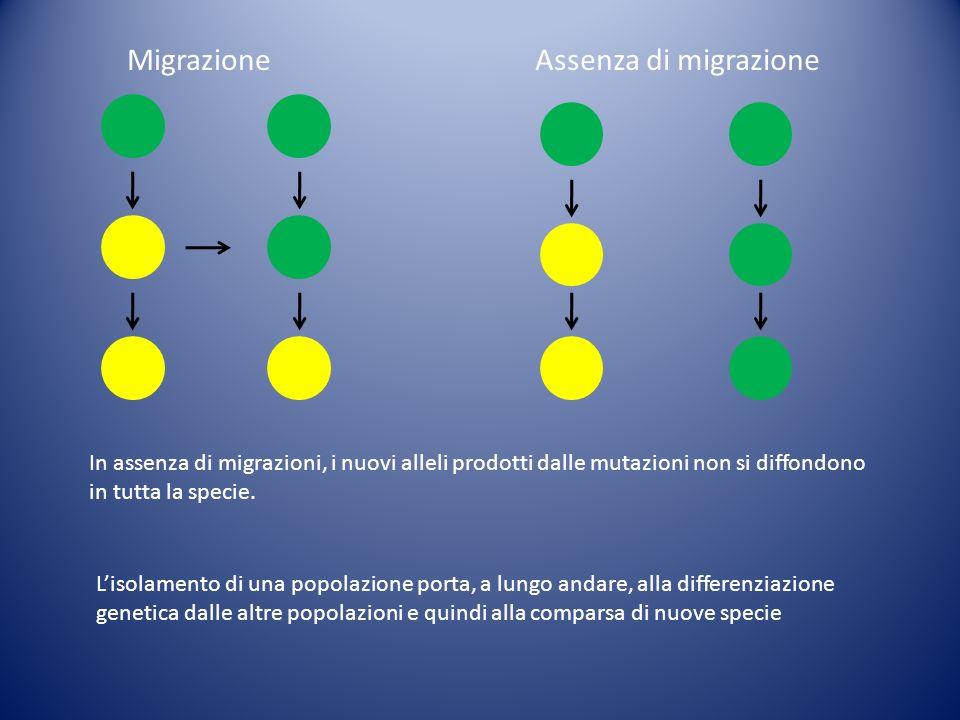 MigrazioneAssenza di migrazione In assenza di migrazioni, i nuovi alleli prodotti dalle mutazioni non si diffondono in tutta la specie. Lisolamento di
