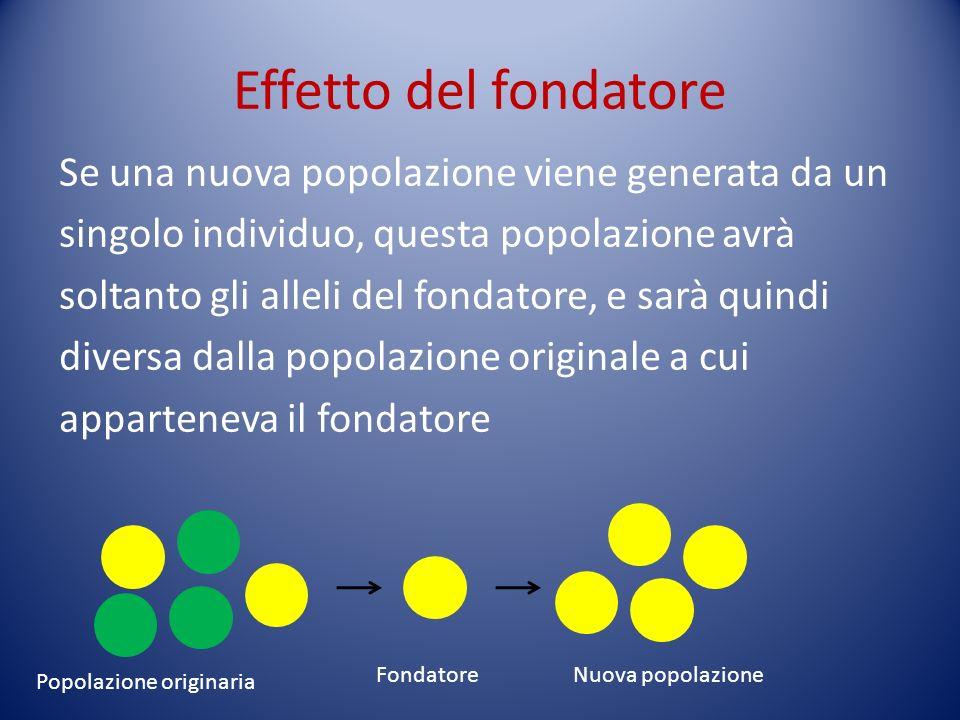 Effetto del fondatore Se una nuova popolazione viene generata da un singolo individuo, questa popolazione avrà soltanto gli alleli del fondatore, e sa
