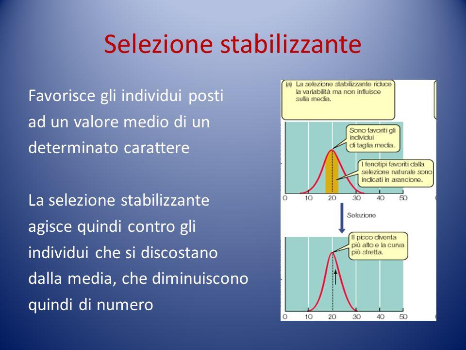 Selezione stabilizzante Favorisce gli individui posti ad un valore medio di un determinato carattere La selezione stabilizzante agisce quindi contro g